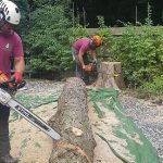 What Is Tree Cutting?