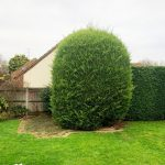 Tree removal in Medway