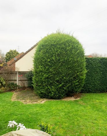 Tree-removal-in-Medway-Main